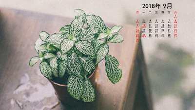 系统天堂2018年9月清新日历桌面壁纸