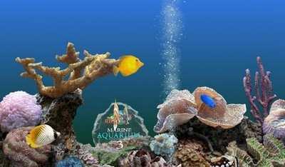 系统天堂动态热带鱼唯美电脑屏保1